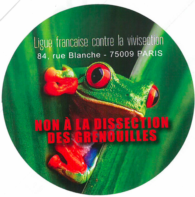dissection-grenouilles